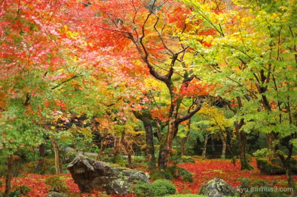 Garden in autumn colors