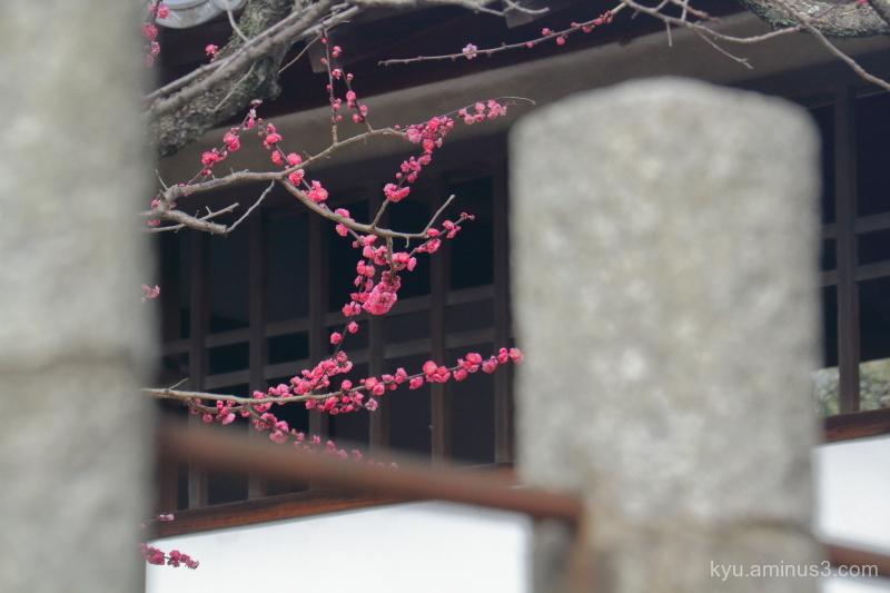 Framing the spring