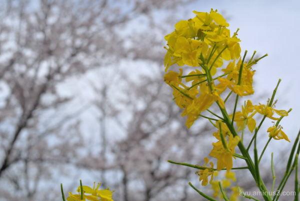 Full bloom in the park