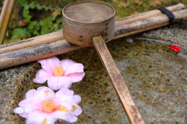 Camellia flower Kangaan temple Kyoto