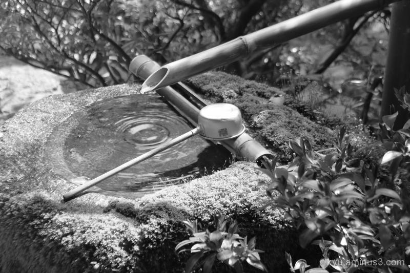 quietness garden Daihoin temple Kyoto