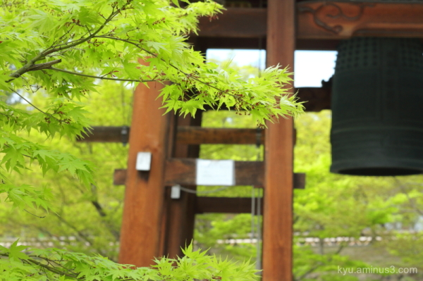 green-maple bell-tower Chishakuin temple Kyoto
