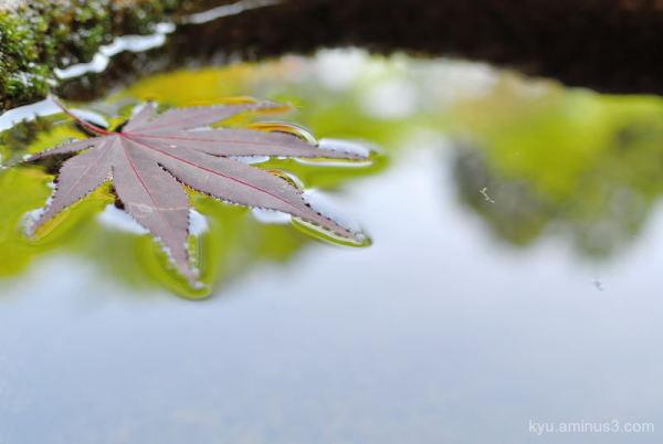 maple-leaf garden Komyoin temple Kyoto