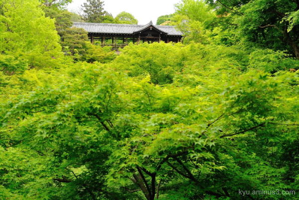 green-maple Gaunkyo Tsutenkyo Tofukuji temple