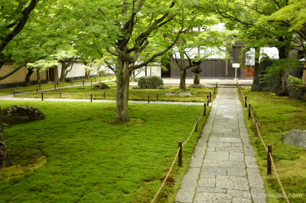 green-maple Kobaiin Daitokuji temple Kyoto
