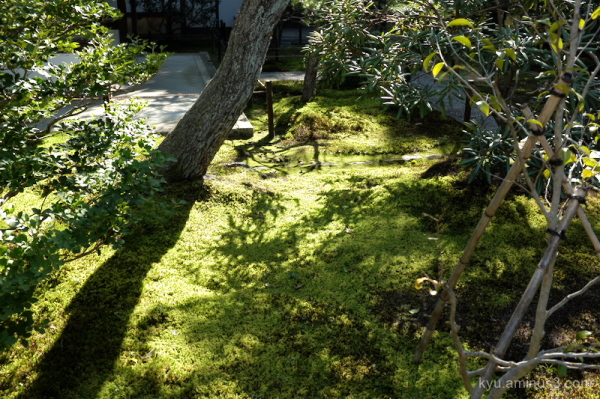 afternoon garden temple Kyoto