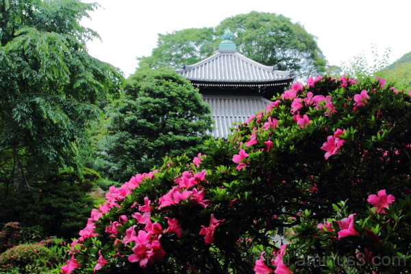 garden & flower in Anrakuji temple  庭 安楽寺