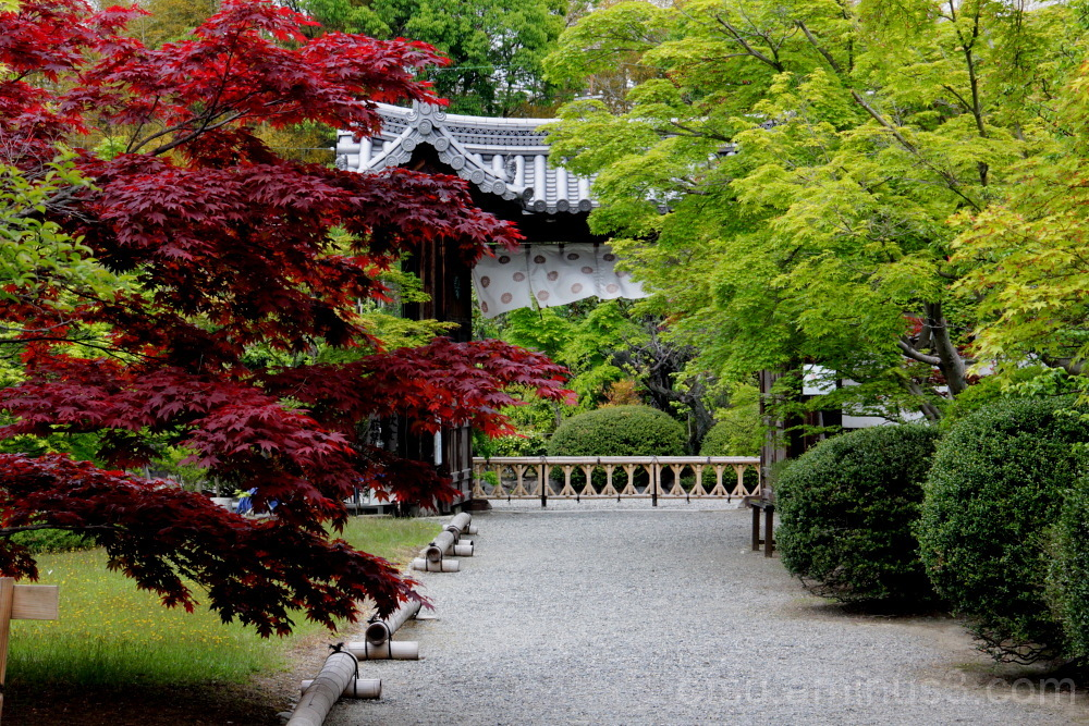 red and green leaves in Kajuji temple 赤・青もみじ 勧修寺