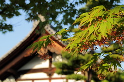 green leaves and temple