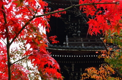 Red leaves and a temple