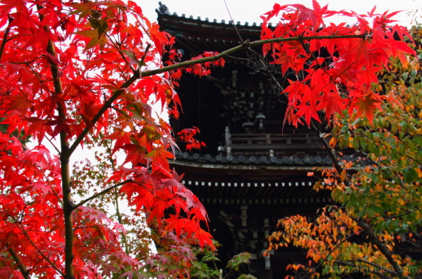 Red leaves and a temple 清凉寺