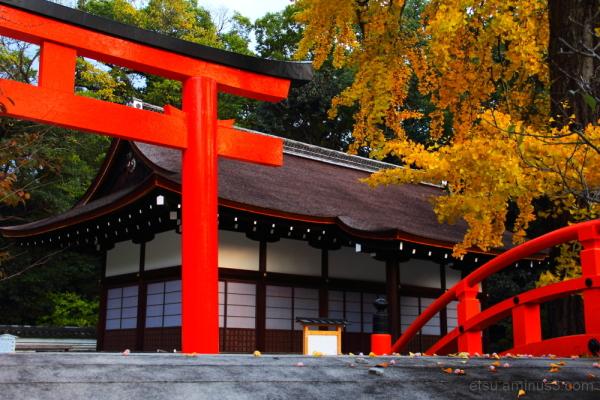 A popular shrine 下鴨神社