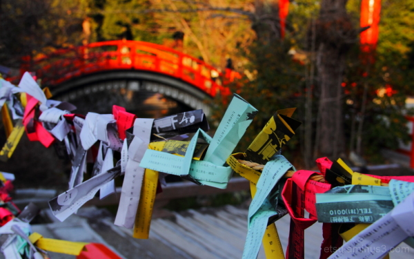 Why don't you tell a fortune? 下鴨神社