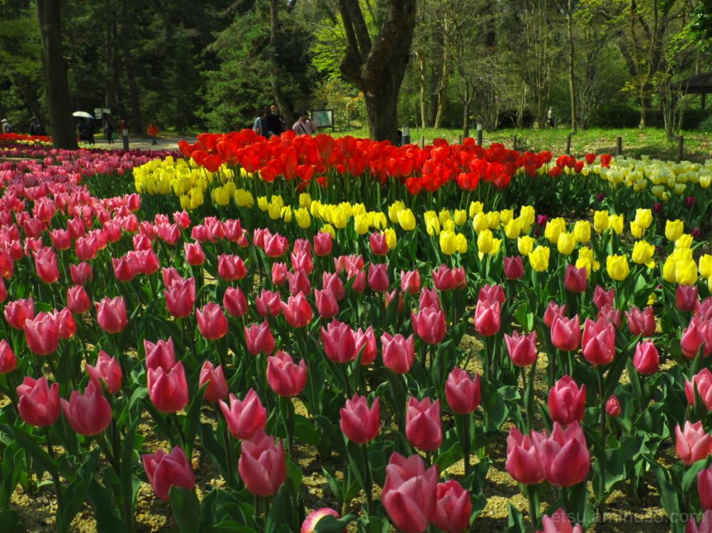 Enjoy colors !! 植物園