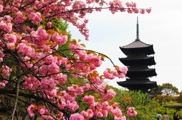 Blooming flowers with a pagoda