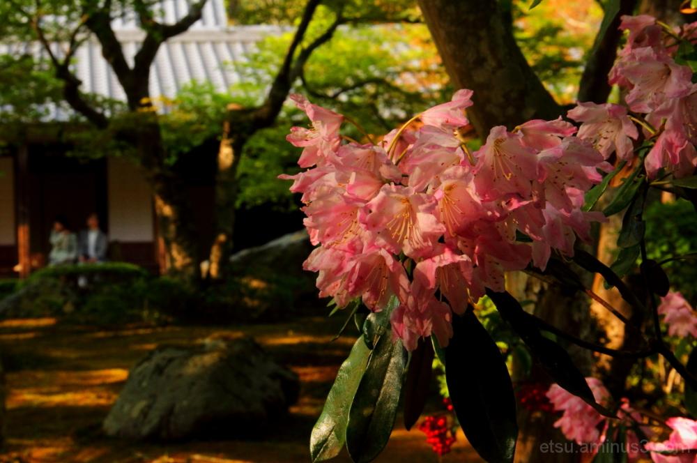 Toward evening (at a garden of a temple) 圓光寺