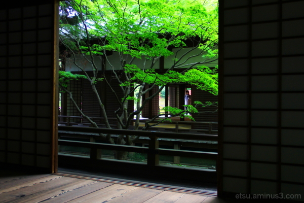 Seeing the garden from the inside 青蓮院