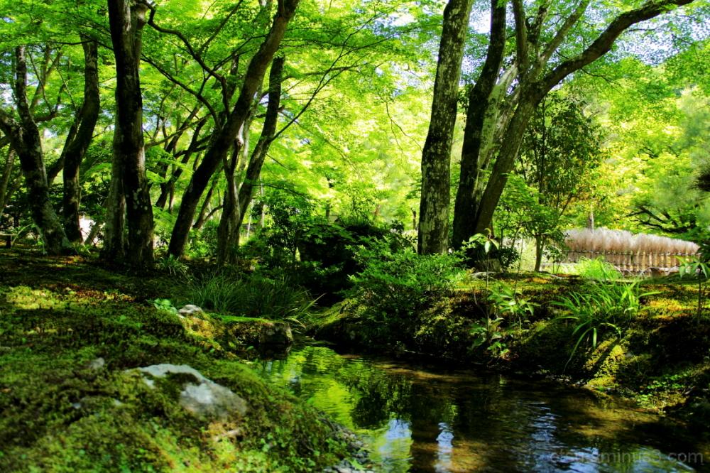 A beautiful day 宝厳院