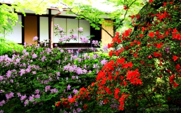 Taking a walk at a garden....  青蓮院
