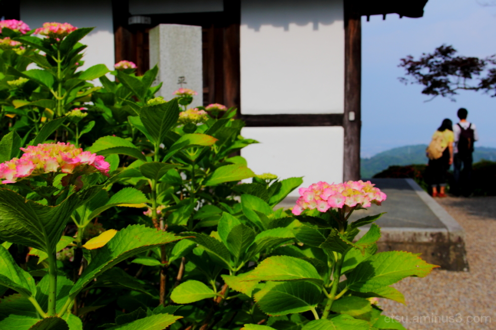 A couple with blooming flowers 善峯寺