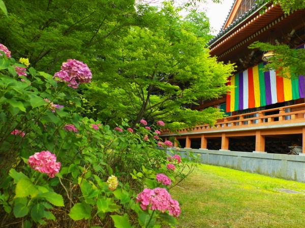 The sensonal flower (in June) 智積院