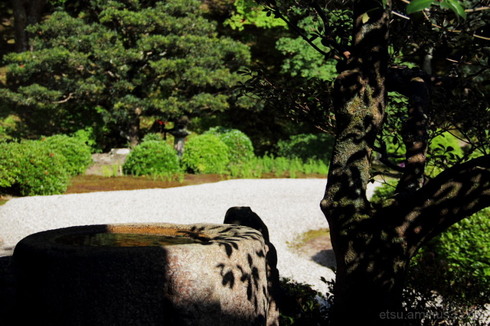 A sunny day (at a temple) 曼殊院