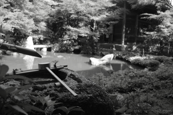 The tranquility (at a garden) 蓮華寺