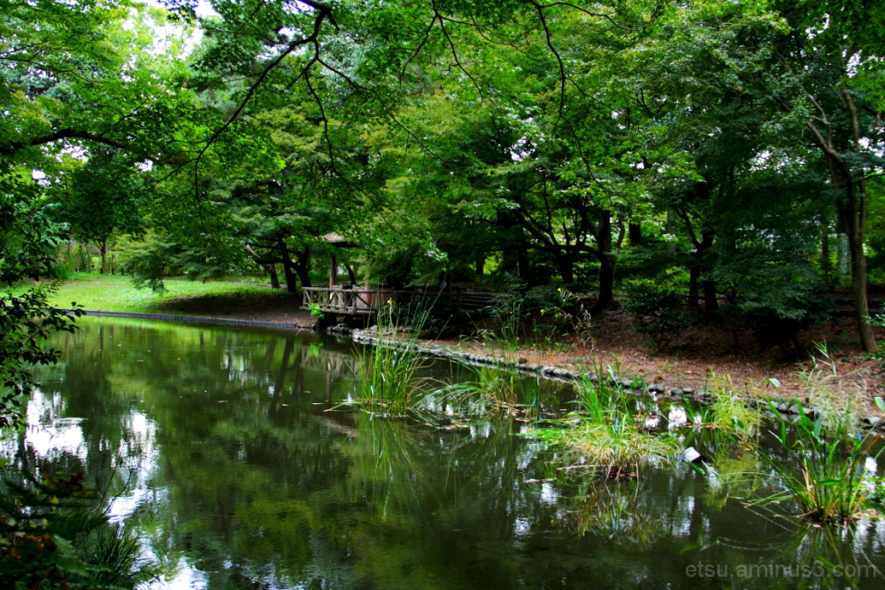 The tranquility......... 植物園