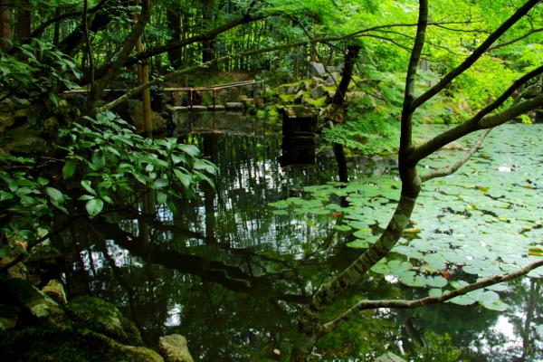 Amazing pond #2 天授庵