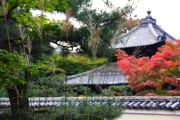 I'm also the leading role in autumn...... 鹿王院、