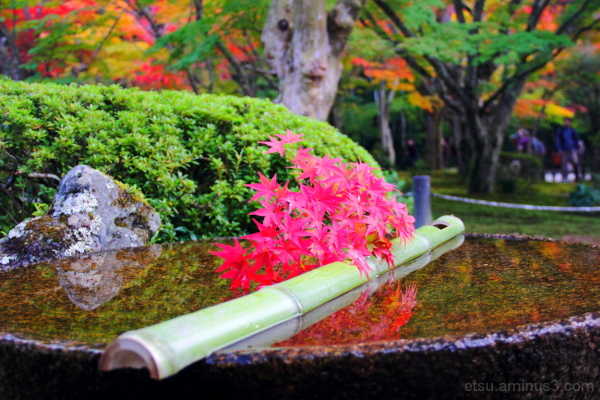 Colorful world........ 圓光寺