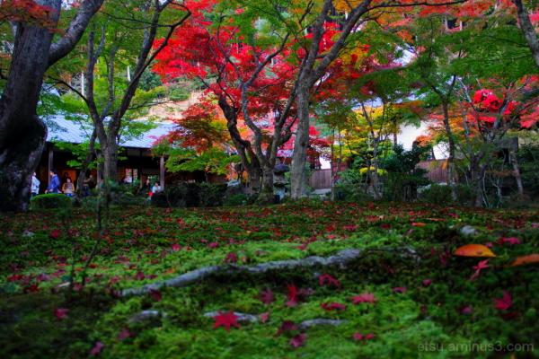 Strolling in the garden...... 圓光寺