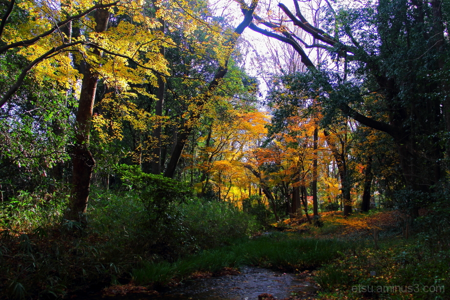 The quiet place........ 糺の森