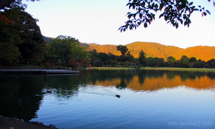 The quiet place........... 大沢の池