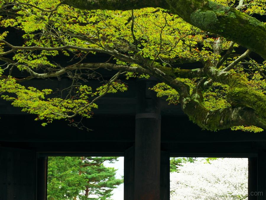 Green leaves near the main gate......