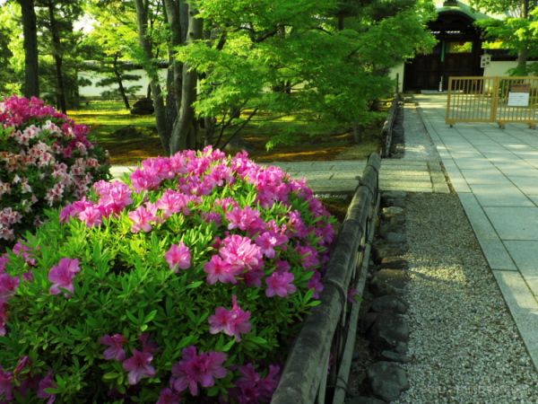 Blooming flowers at temple......