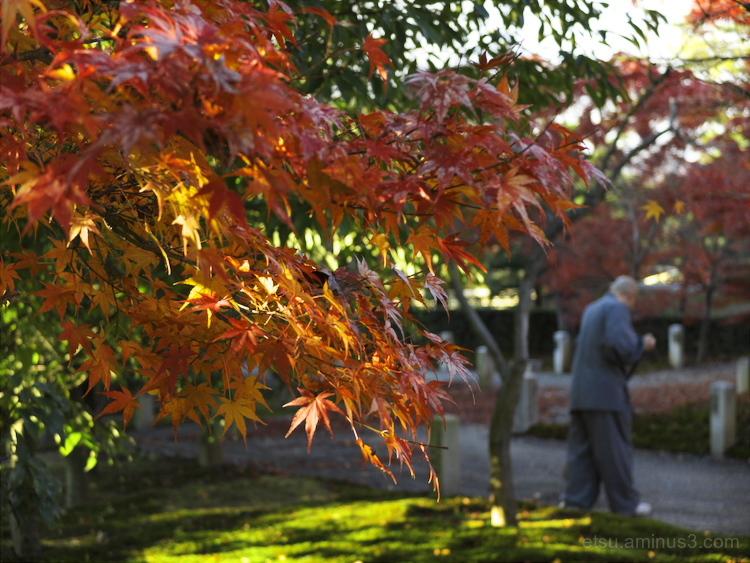 Red leaves at a temple.............