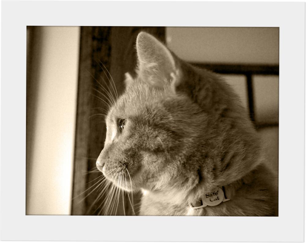 Odd Shots - Riley the Cat