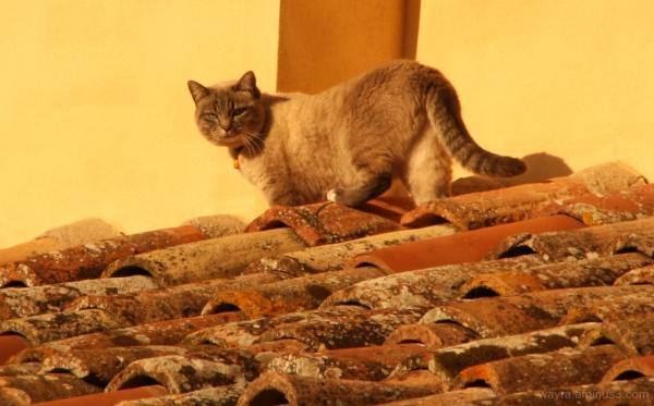 Sul tetto