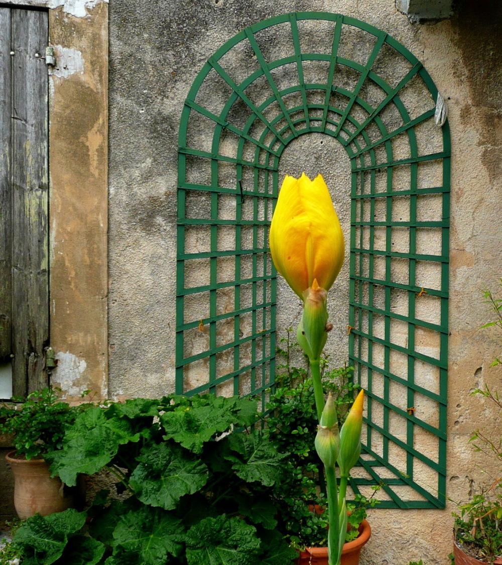 ROMANTIC BIRTH OF A FLOWER ....