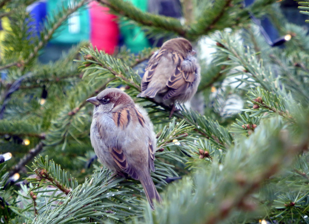 NOEL POUR TOUT LE MONDE - CHRISTMAS FOR EVERYONE