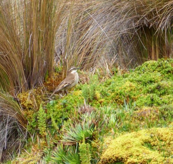 EQUATEUR : balade à 4200 m ( faune et flore)