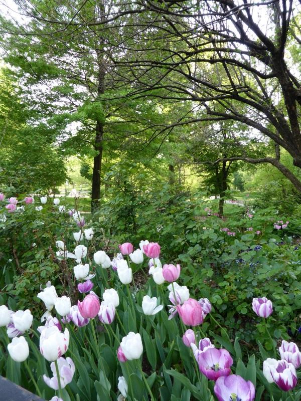NEW-YORK : Central Park, havre de paix ..