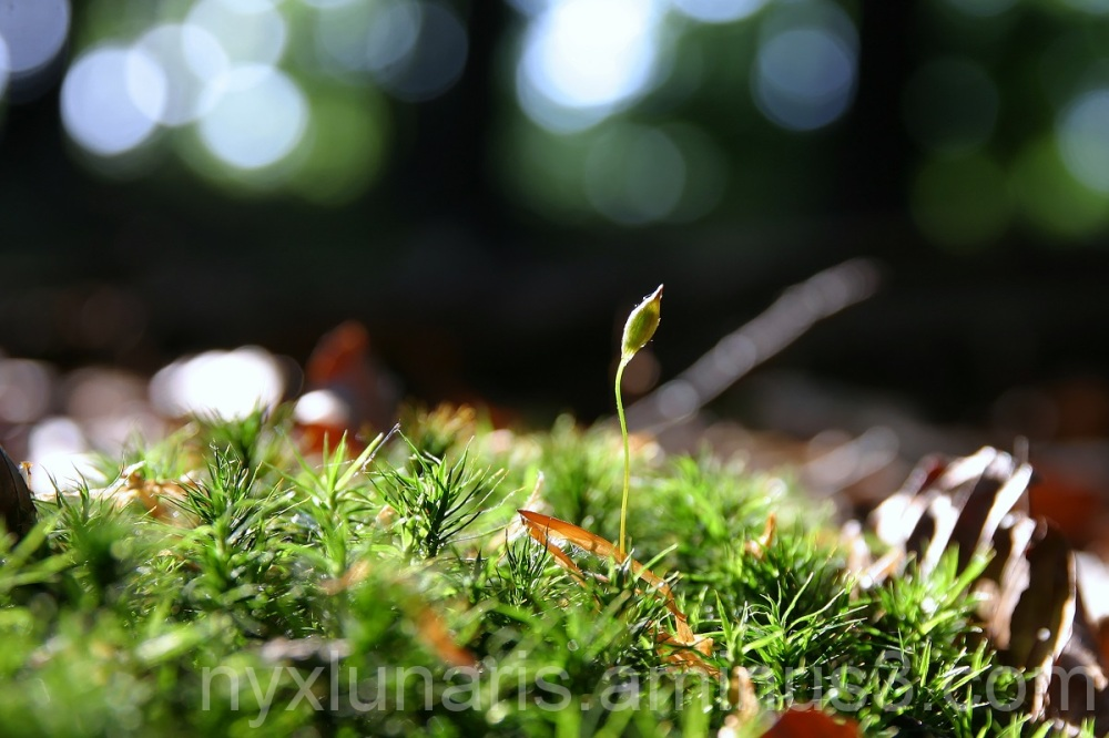 seedling, plantlet, sprout, bud, forrest, wood