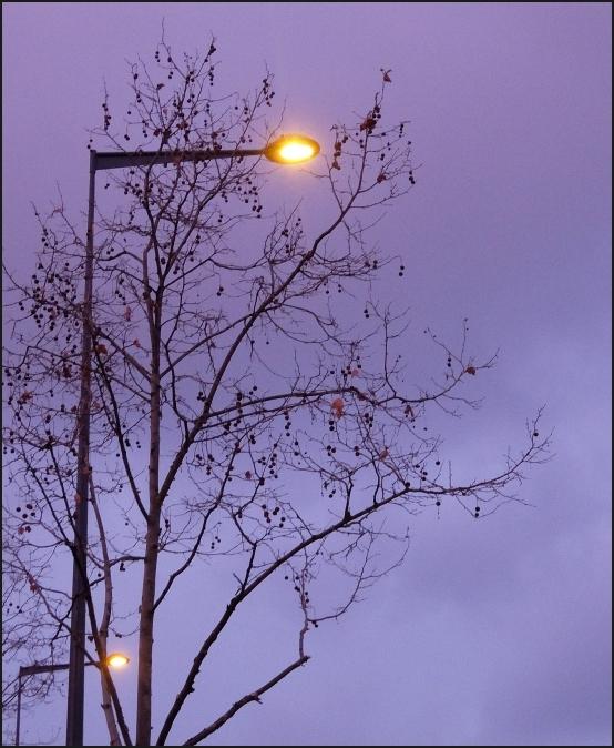 Arbres luminaires