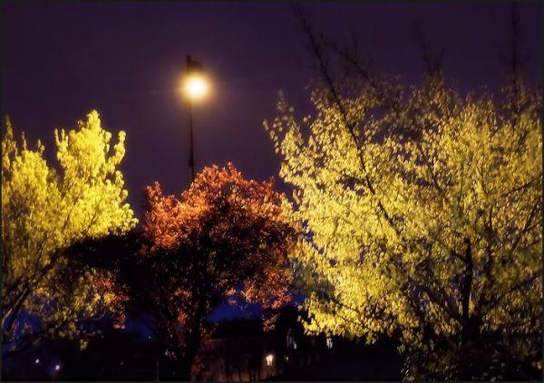 Les couleurs de mes nuits