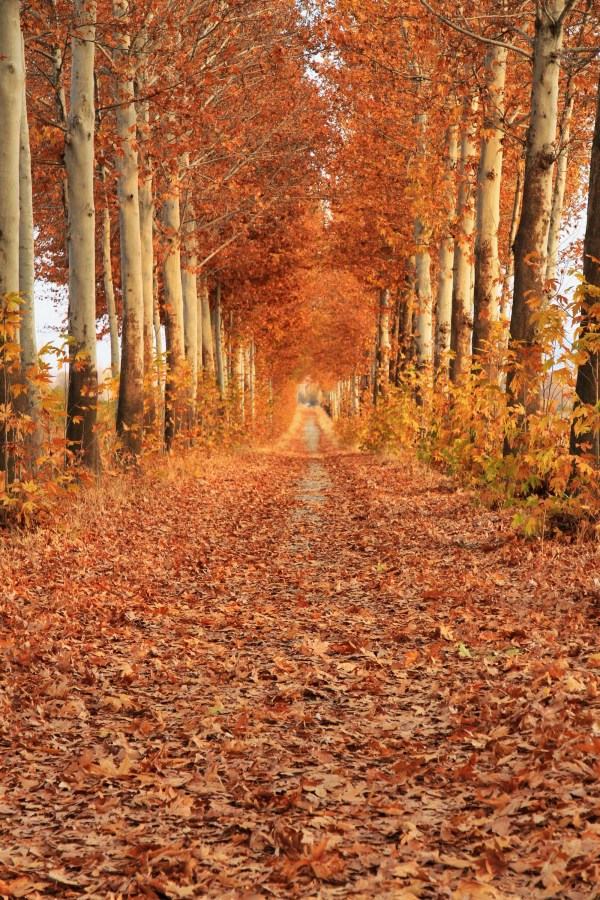 بیا باهم قدم بزنیم