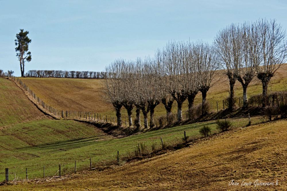 Paysage de lignes. / Lines landscape.