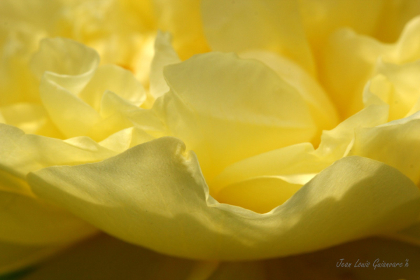 Jaune soleil. / Yellow sun.