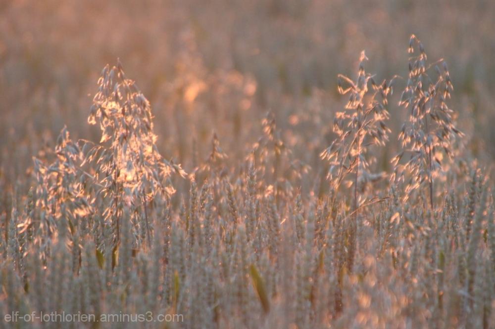 In the evening sun II